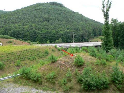 Hügel an der B10 bei Ruppertsweiler mit unzähligen Hirschkäfer-Überresten